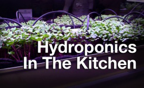 Hydroponics on GeekBeat Episode 648